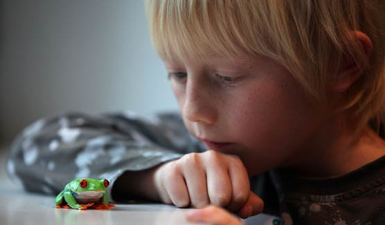 Manchester science festival boy looking at frog image