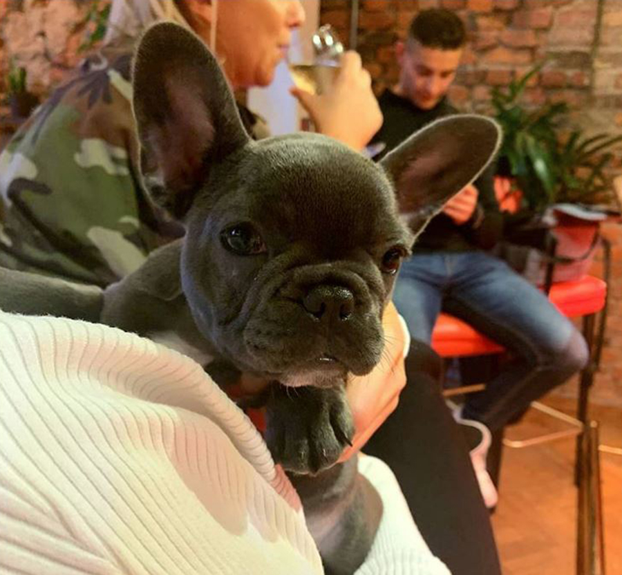 10 Fantastic Dog Friendly Places in Manchester